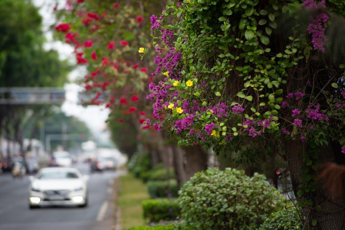 hoa xuân Phú Mỹ Hưng