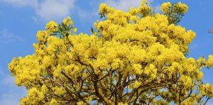 """Giữa khu đô thị Phú Mỹ Hưng vẫn thấy """"hoa vàng trên cỏ xanh"""""""